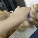 我家猫天天揍我