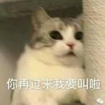 霜落知枫桦